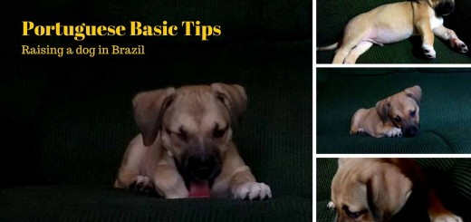Brazilian dogs - Raising a dog in Brazil